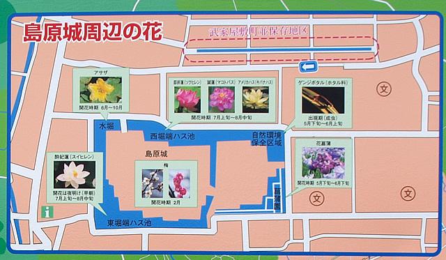 島原城周辺の花
