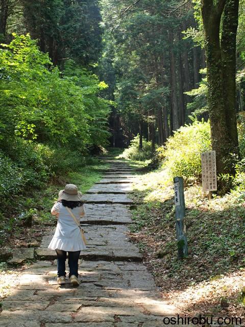 藤坂を登る