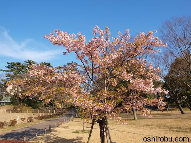 伊東 小室桜